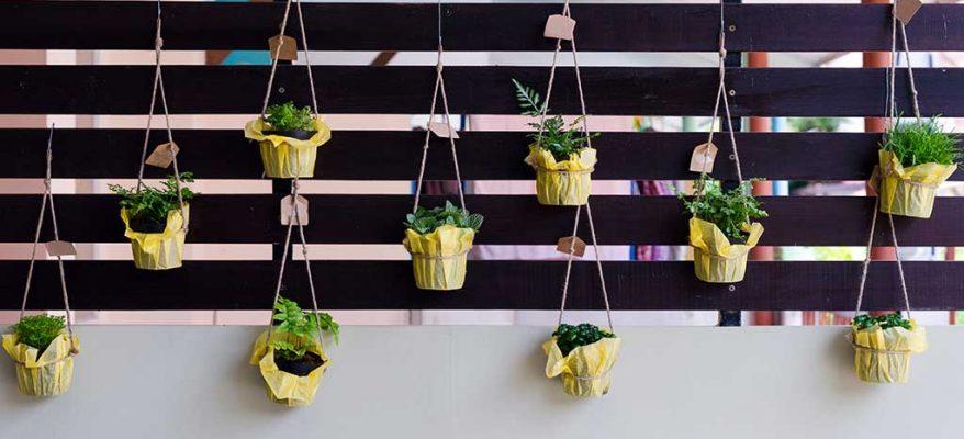 come coltivare un orto in casa